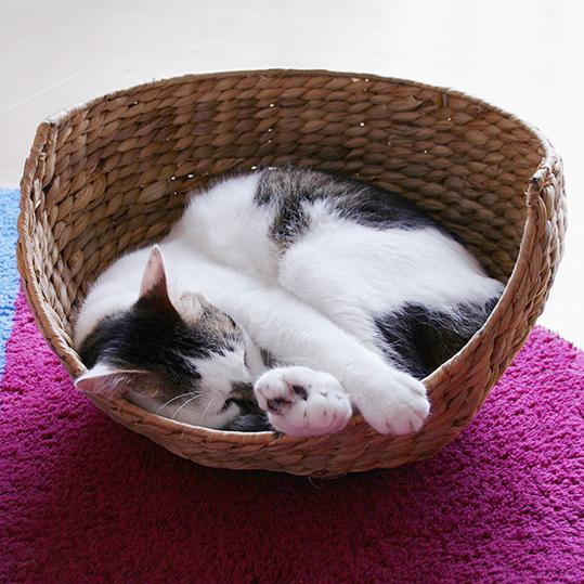 猫バスケット!_d0193211_1772043.jpg