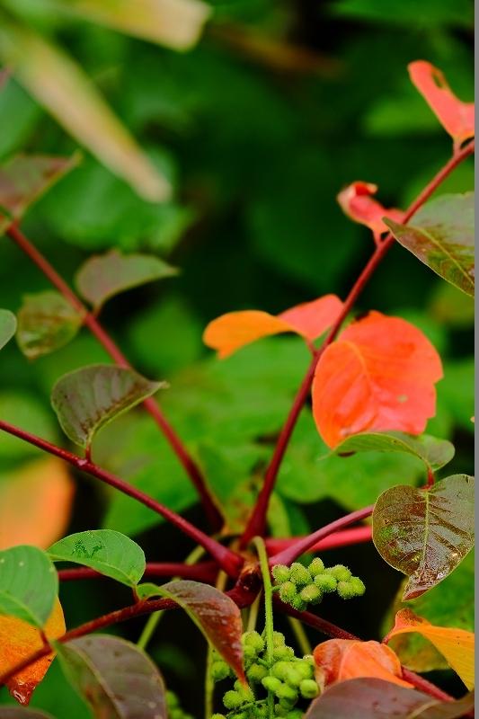 秋がやってくる_f0050534_06440001.jpg