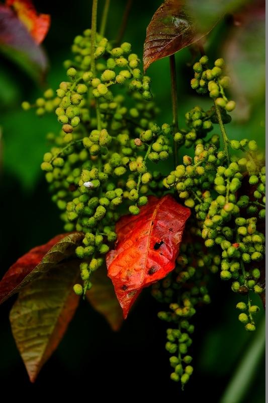 秋がやってくる_f0050534_06440064.jpg