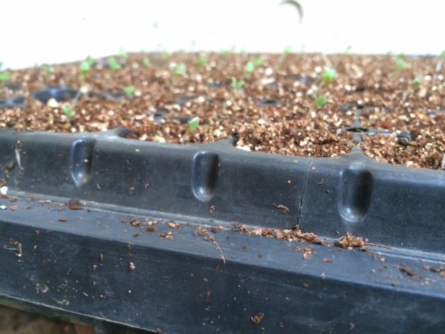 適度な雨で 土が潤いました 播種や畝作りを始めます 畑直蒔きの畝やパレット蒔きの様子_c0222448_14272751.jpg