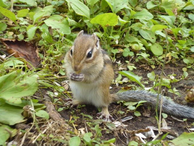 北海道で出会った生き物は!?_b0246953_15400479.jpg