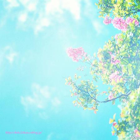 ピンク色輝くとき・・・_e0221779_11344559.jpg