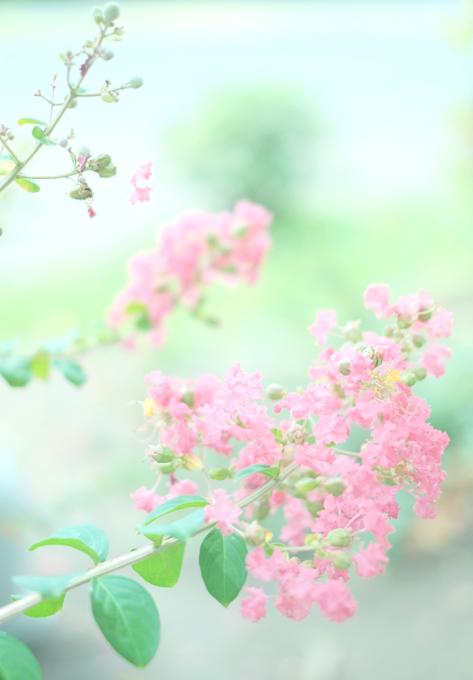 ピンク色輝くとき・・・_e0221779_1135540.jpg