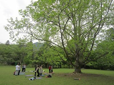 森のいやし ~和みのヨーガ~ 参加者募集中!!_f0212679_13041354.jpg