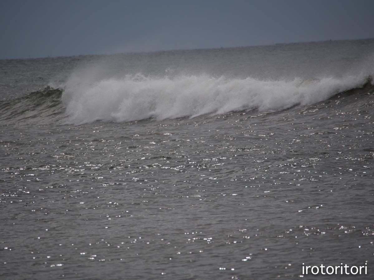 海  (ウミネコ)  2015/08/25_d0146592_11452983.jpg