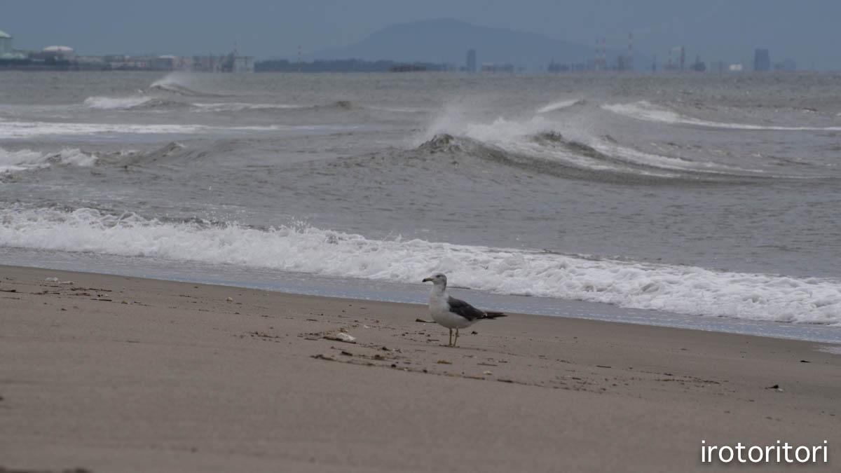 海  (ウミネコ)  2015/08/25_d0146592_11453480.jpg