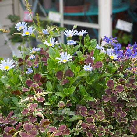 お花の終わった寄せ植えの鉢の中はこんな風に_a0292194_1629302.jpg
