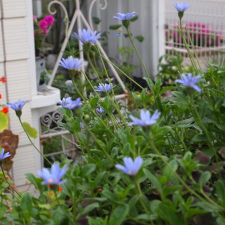 お花の終わった寄せ植えの鉢の中はこんな風に_a0292194_16303744.jpg
