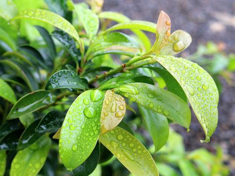 今日も雨です(#^^#)_c0140599_11505237.jpg