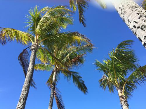 ハワイらしい天気になりました_d0285416_18162553.jpg