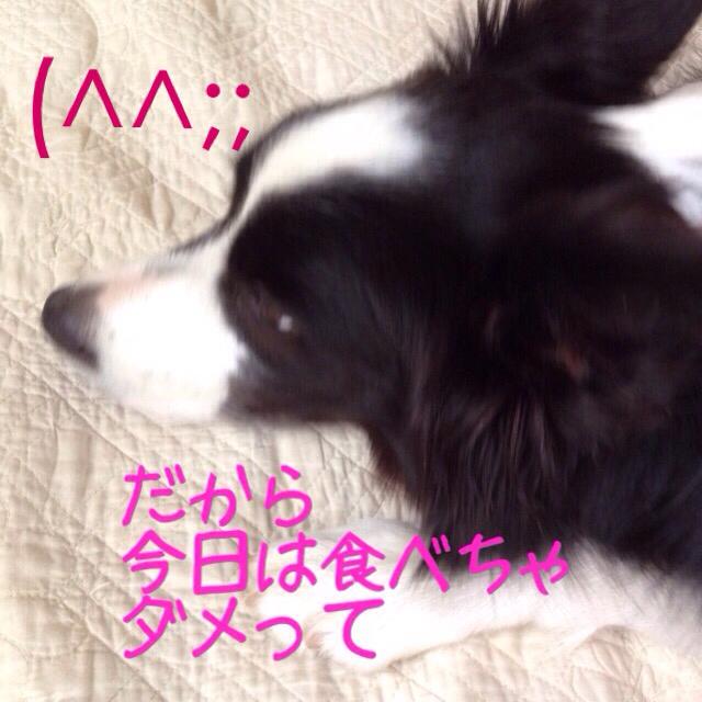 a0232619_16101216.jpg