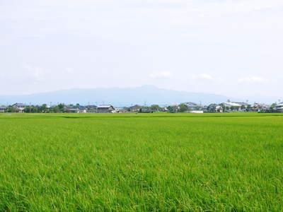 砂田米 今年も順調にお米の花が咲きました!_a0254656_17301428.jpg