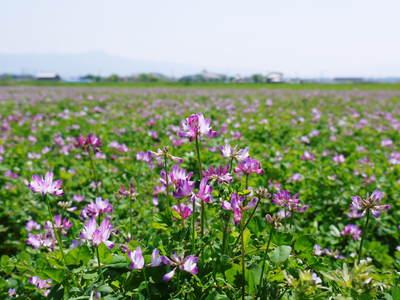 砂田米 今年も順調にお米の花が咲きました!_a0254656_1734731.jpg