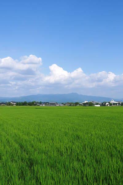 砂田米 今年も順調にお米の花が咲きました!_a0254656_1817268.jpg