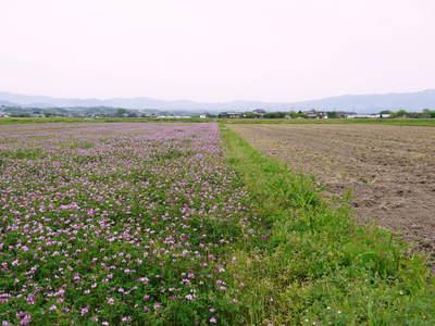 砂田米 今年も順調にお米の花が咲きました!_a0254656_18313688.jpg