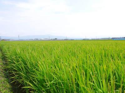 砂田米 今年も順調にお米の花が咲きました!_a0254656_1838214.jpg