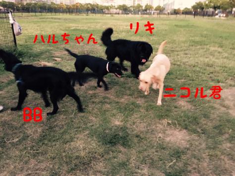 c0343364_15435913.jpg