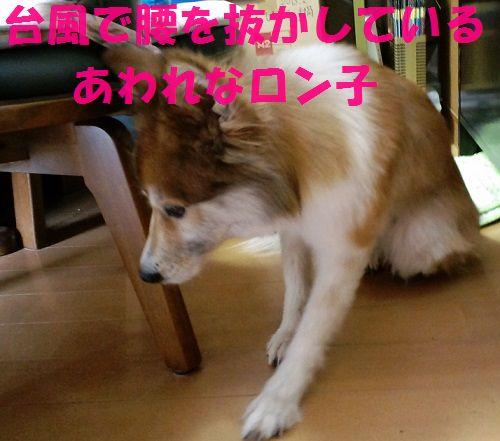 c0025171_16342610.jpg