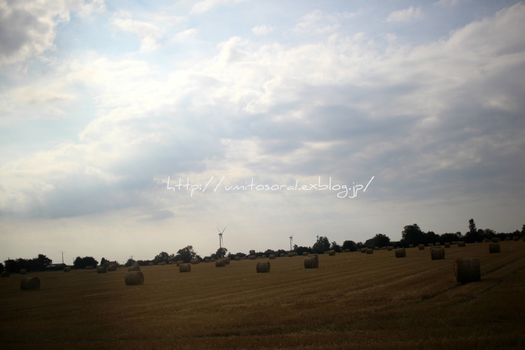 ノルマンディの牛たち_b0324291_03461800.jpg