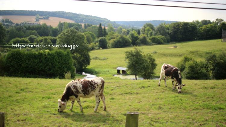 ノルマンディの牛たち_b0324291_03461971.jpg