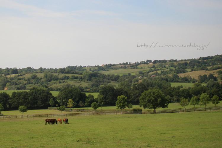 ノルマンディの牛たち_b0324291_03462028.jpg