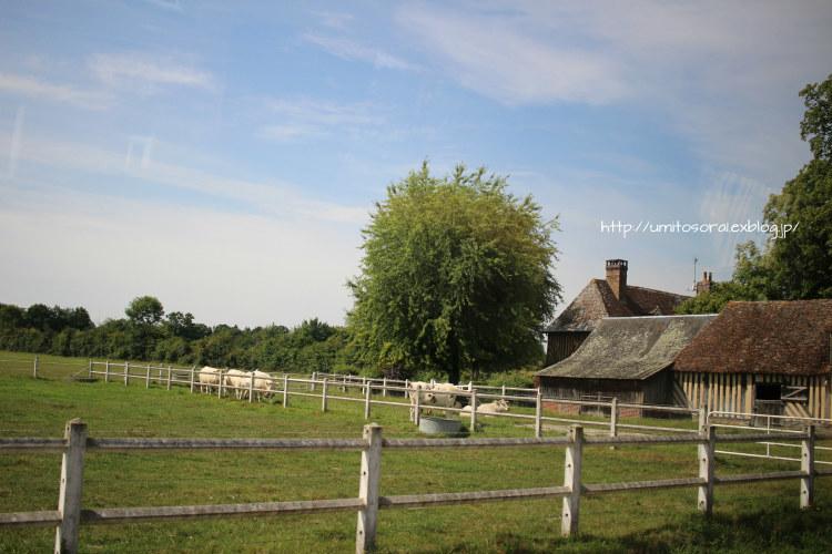ノルマンディの牛たち_b0324291_03462112.jpg