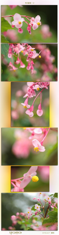 f0164592_9364573.jpg