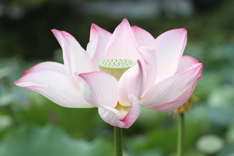 花びらの舟  _b0190710_1553563.jpg