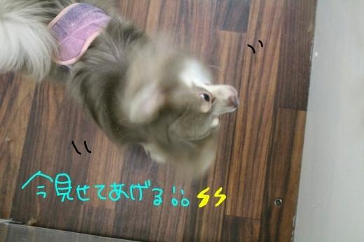 b0130018_00171742.jpg