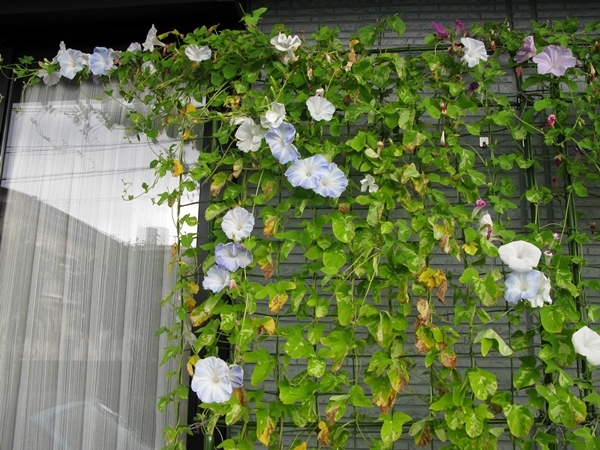 狂い咲き?_f0129726_21410447.jpg