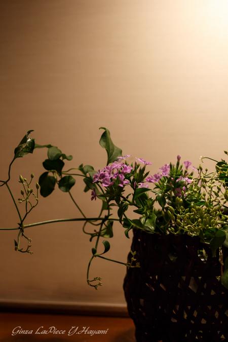 花のある風景 料亭の花_b0133053_001698.jpg