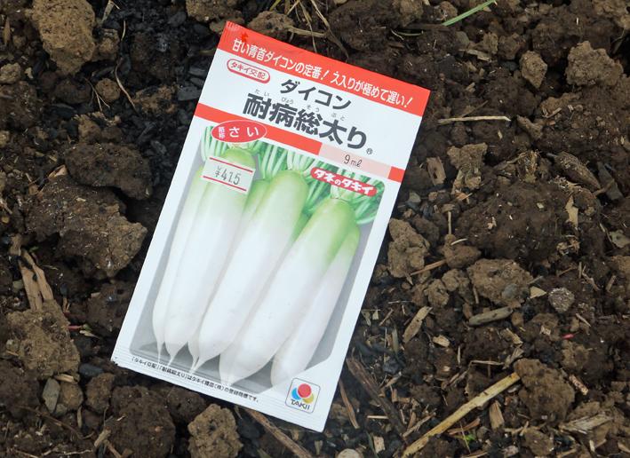秋ジャガ植え付け、ダイコンやキャベツなどの種蒔き8・28~29_c0014967_21251766.jpg