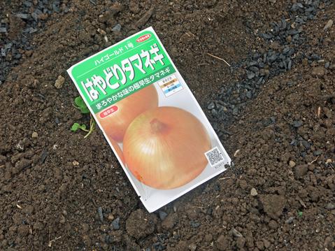 秋ジャガ植え付け、ダイコンやキャベツなどの種蒔き8・28~29_c0014967_21265533.jpg