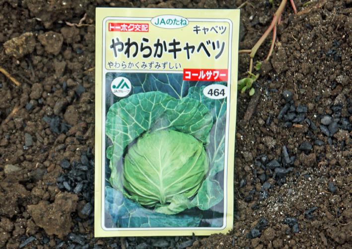 秋ジャガ植え付け、ダイコンやキャベツなどの種蒔き8・28~29_c0014967_21283029.jpg