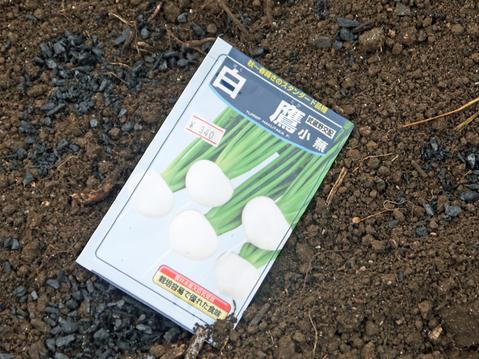 秋ジャガ植え付け、ダイコンやキャベツなどの種蒔き8・28~29_c0014967_21285789.jpg