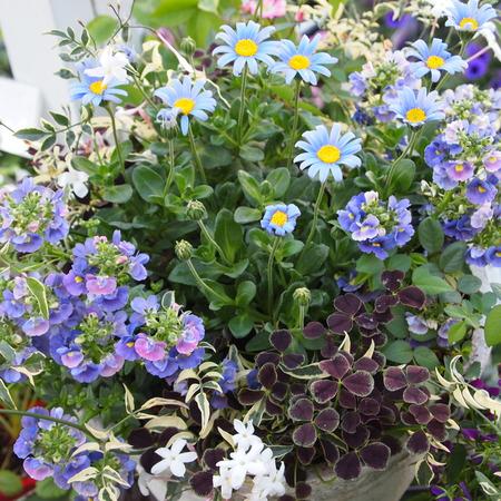 お花の終わった寄せ植えの鉢の中はこんな風に_a0292194_17435374.jpg