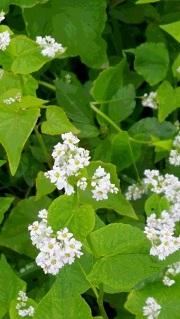 白い花が・・・、_d0003224_12595206.jpg