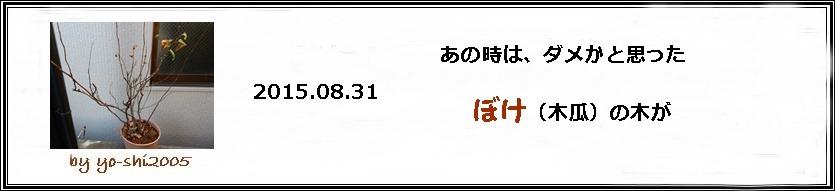 e0033229_20101535.jpg