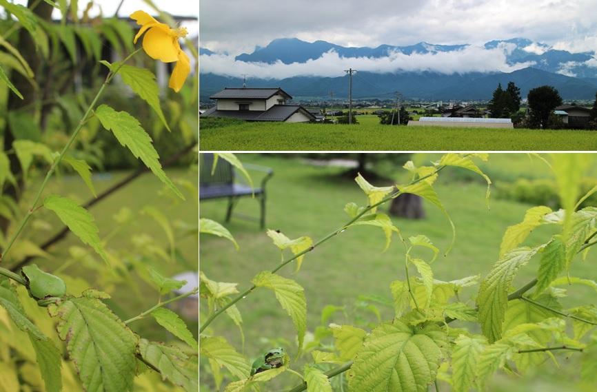 8月の終わりに庭で_a0212730_18583698.jpg