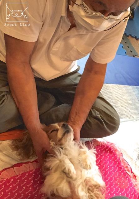 愛犬の為の整体教室6年目突入_c0099133_15432226.jpg