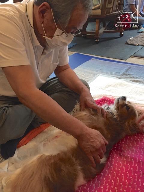 愛犬の為の整体教室6年目突入_c0099133_15445264.jpg