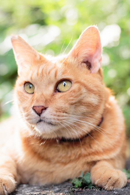 猫のいる風景 日比谷公園 木漏れ日のチャッピー_b0133053_0553136.jpg