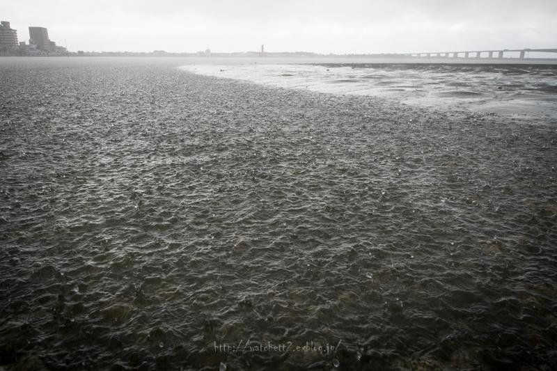 秋雨前線停滞する浜名湖へ‥_e0136764_14341497.jpg