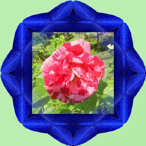 c0129688_4253863.jpg
