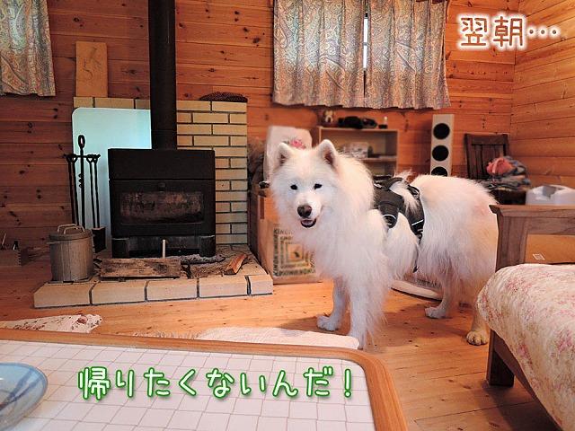 お山で酒池モフりん再び_c0062832_1171162.jpg