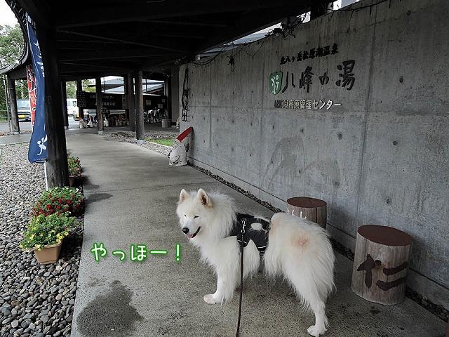 お山で酒池モフりん再び_c0062832_1171816.jpg