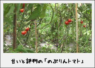「のぶりんトマト」の甘い謎を解明!?なのだ。_c0259934_15421150.jpg