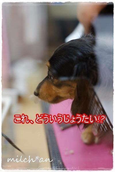b0115642_2044522.jpg