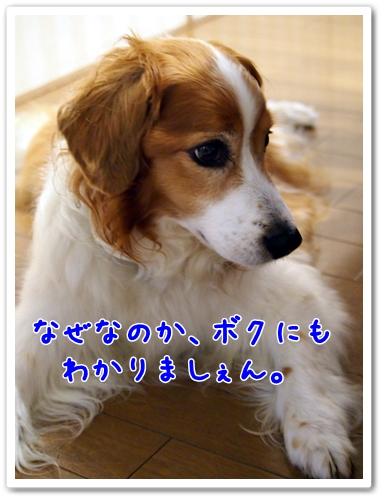 d0013149_19495419.jpg