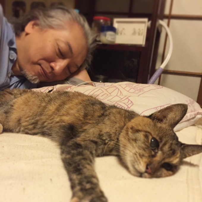 猫 寝方 変